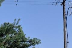 Vögel auf einer Oberleitung