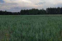 DWORZA hinterm Wald